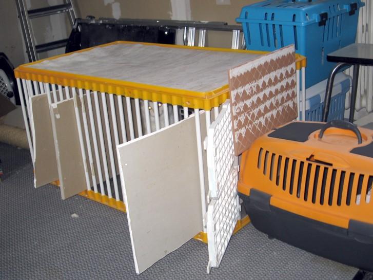 Mettre un chat dans une caisse de transport Mettre18