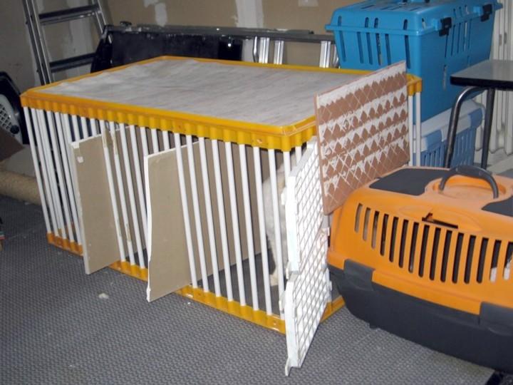 Mettre un chat dans une caisse de transport Mettre19