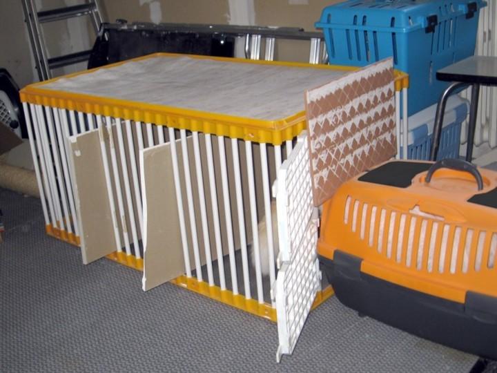 Mettre un chat dans une caisse de transport Mettre20