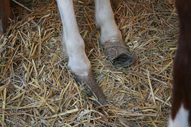 Lili et Summer - ponettes shetlands - adoptées en avril 2009 par agnes P - Page 2 Img_0714