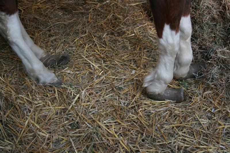 Lili et Summer - ponettes shetlands - adoptées en avril 2009 par agnes P - Page 2 Img_0715