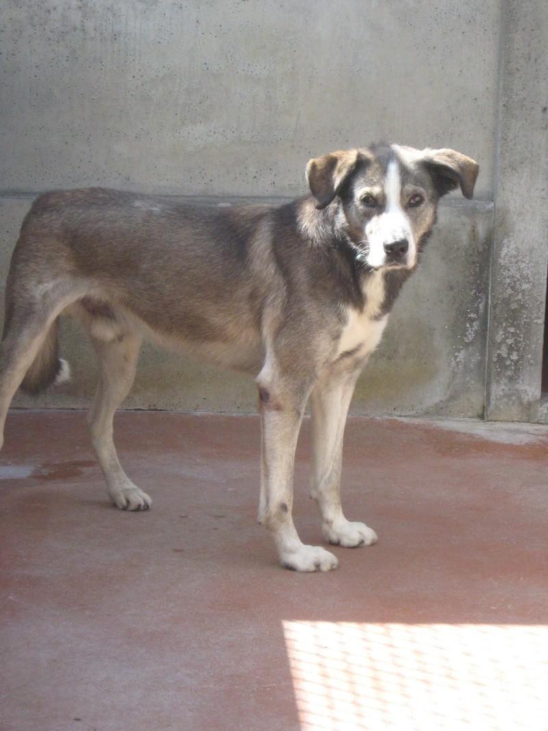 SPARK X husky (m) né 01/04/2000 /7 ans de box  REF:44 DECEDE Rescue10