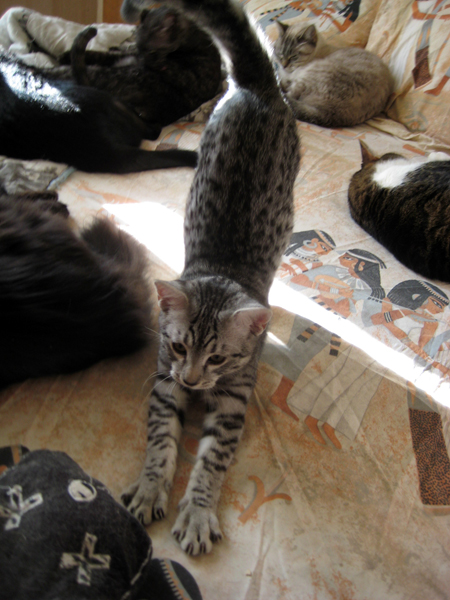 E'Sethi Accuente, le chaton voyageur - Page 2 Befene10