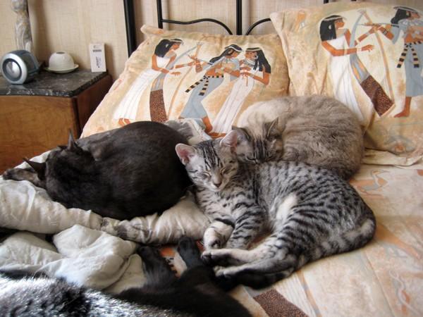 E'Sethi Accuente, le chaton voyageur - Page 2 Befens10