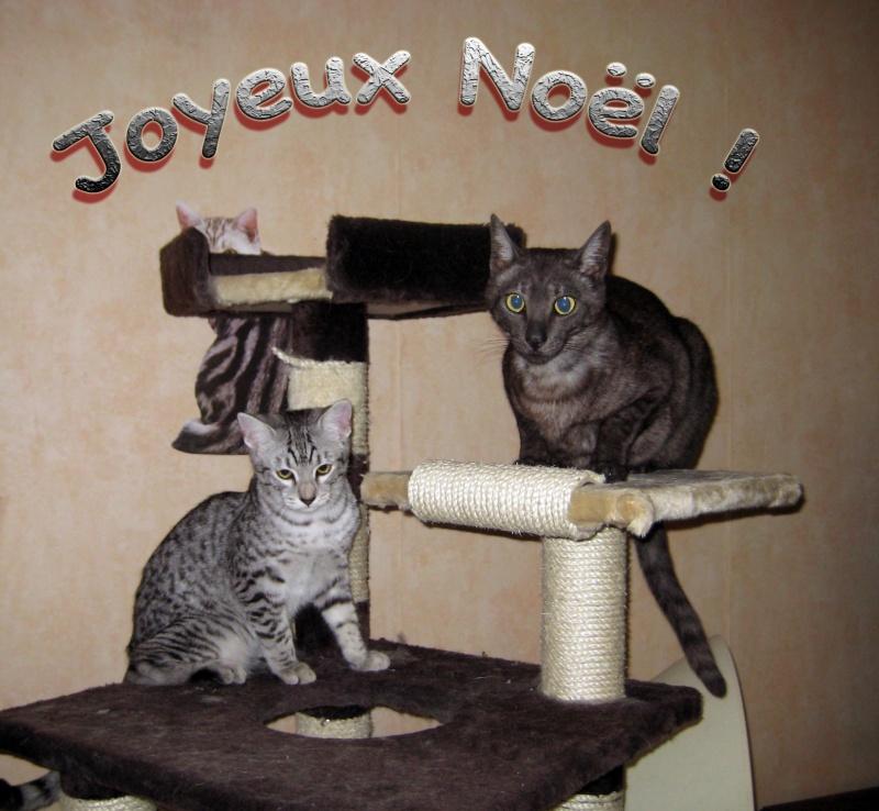 E'Sethi Accuente, le chaton voyageur - Page 2 Joyeux10