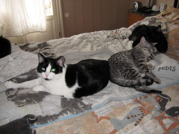 E'Sethi Accuente, le chaton voyageur - Page 2 Marous10