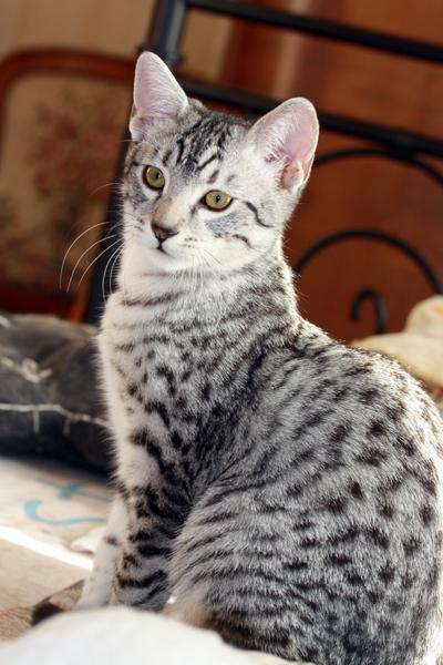 E'Sethi Accuente, le chaton voyageur - Page 2 Sethi110
