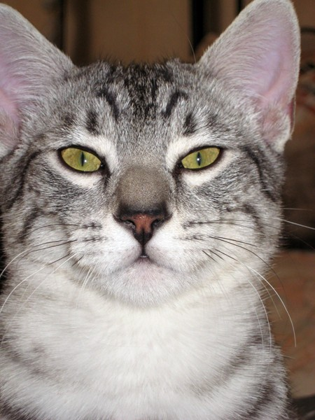 E'Sethi Accuente, le chaton voyageur - Page 2 Sethi111