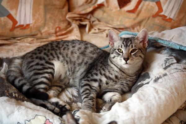 E'Sethi Accuente, le chaton voyageur - Page 2 Sethic10