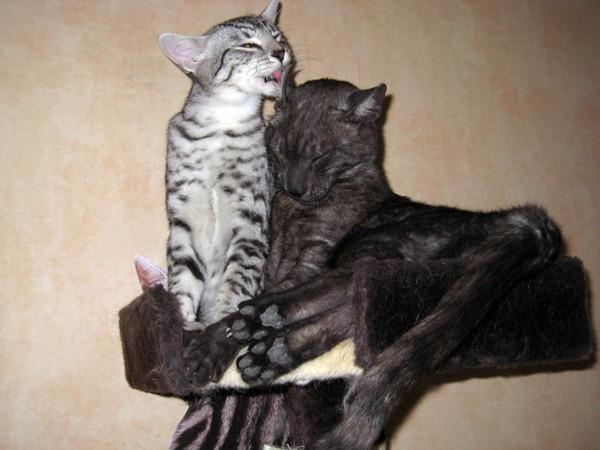 E'Sethi Accuente, le chaton voyageur - Page 2 Sethil10