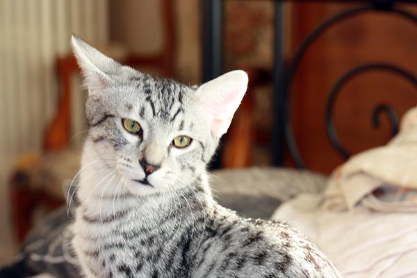 E'Sethi Accuente, le chaton voyageur - Page 2 Sethio10