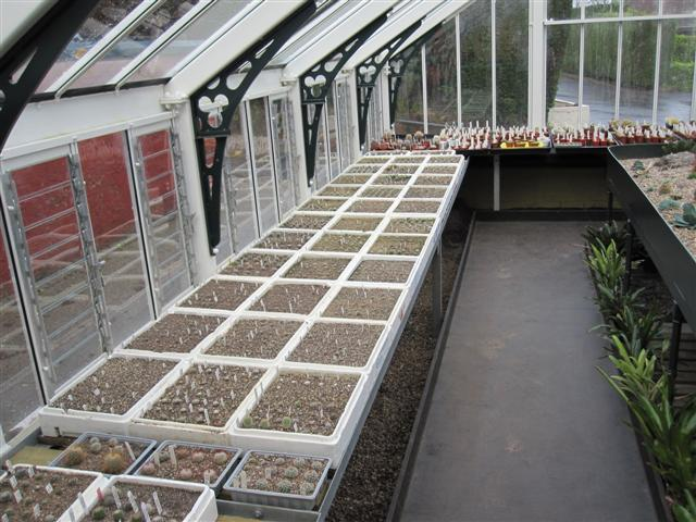 Quick look around the greenhouse 1_smal10
