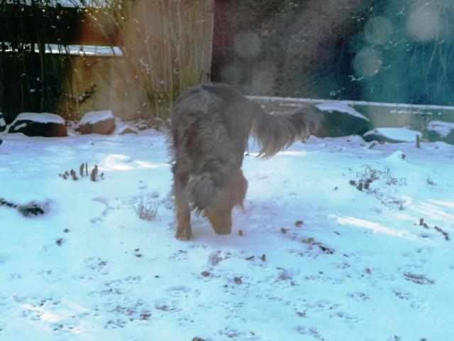 mon chien : peur bleue aujourd'hui ! Diego_14