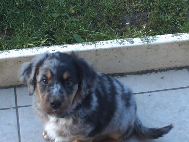 mon chien : peur bleue aujourd'hui ! Photo_10