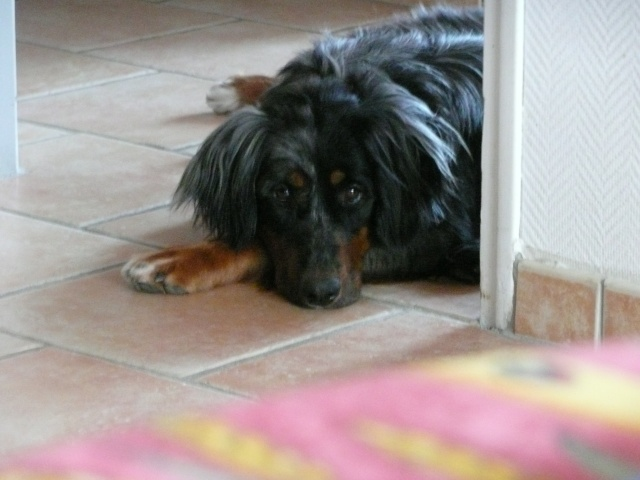 mon chien : peur bleue aujourd'hui ! Skate_10