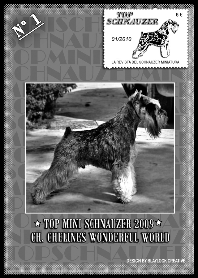TOP MINI SCHNAUZER Portad11