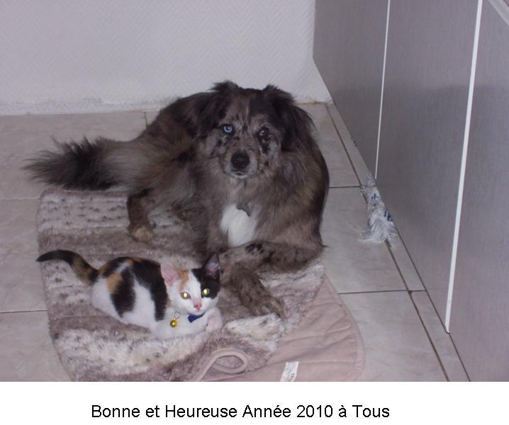BONNE ANNEE 2010 Diaman13