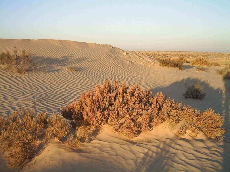 Tunisie 2011 Desert11