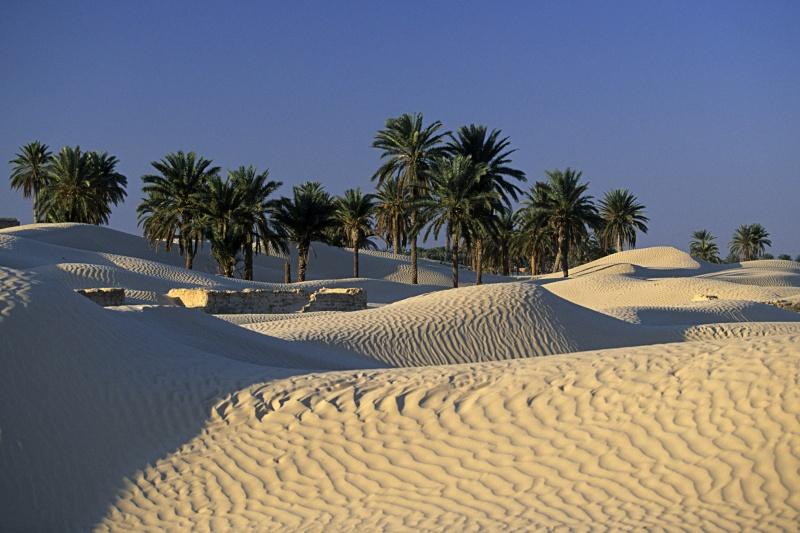 Tunisie 2011 Desert15