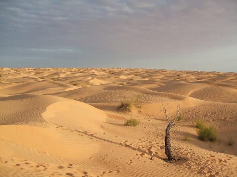 Tunisie 2011 Desert17