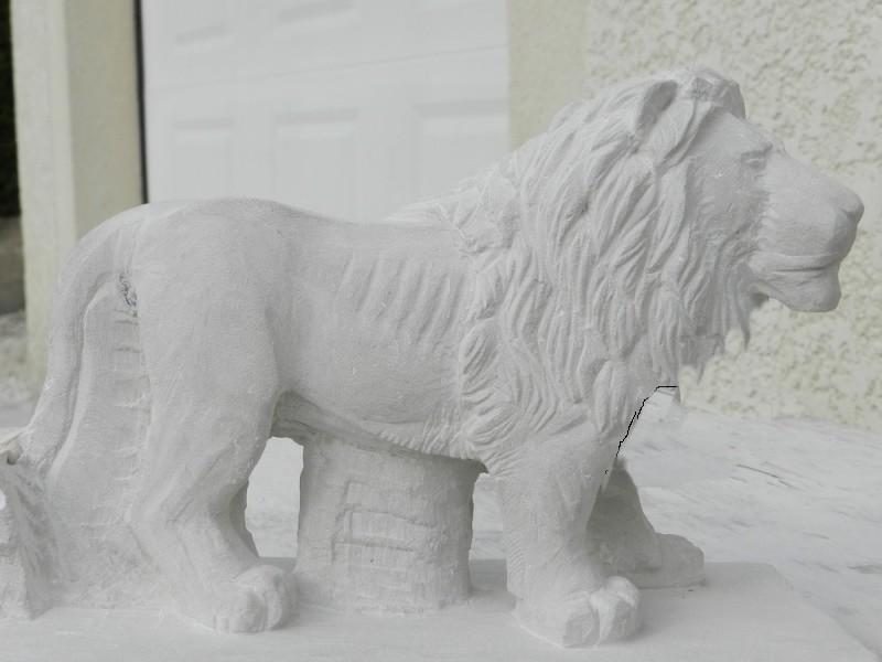 Lion Dscn4710