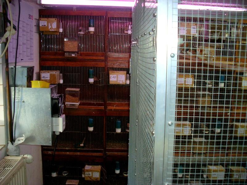 Présentation de ma pièce d'élevage Sl384817