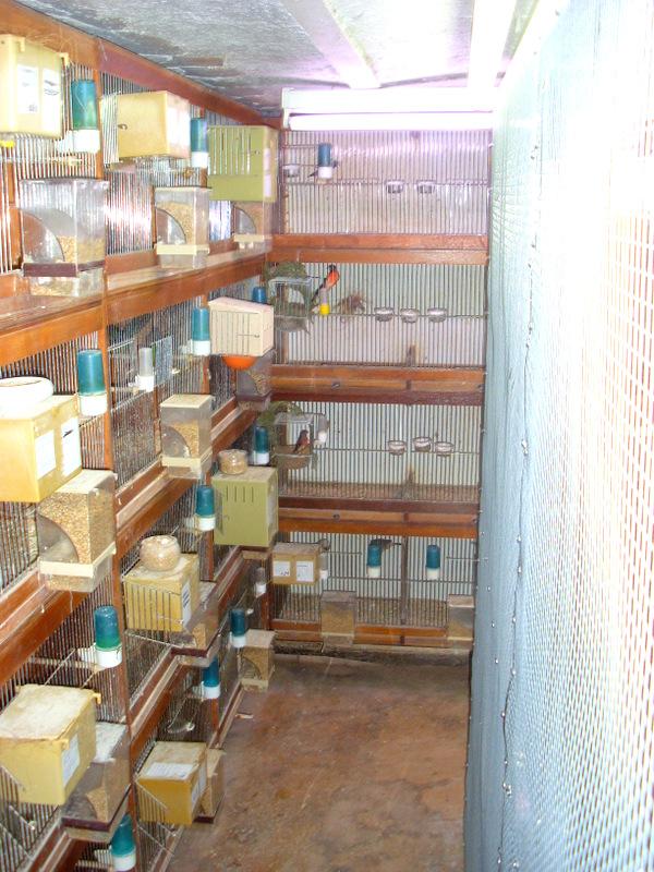 Présentation de ma pièce d'élevage Sl384818