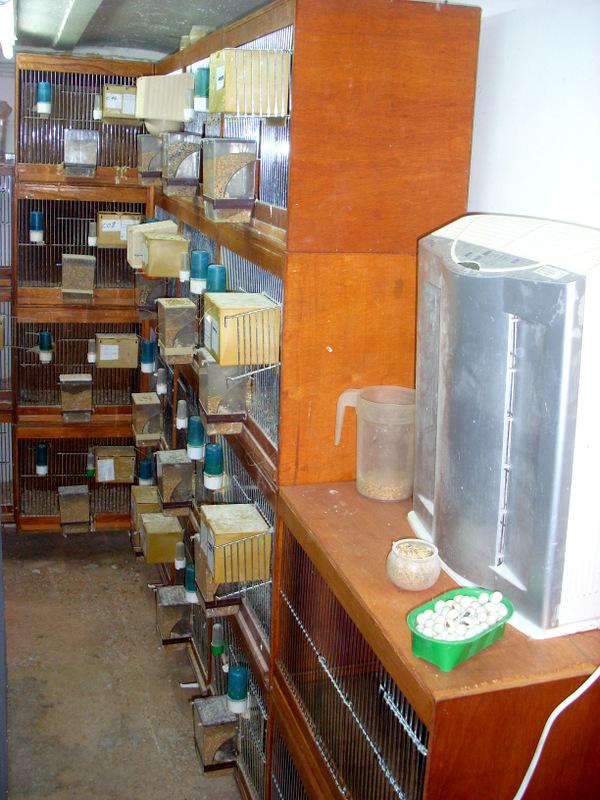 Présentation de ma pièce d'élevage Sl384821