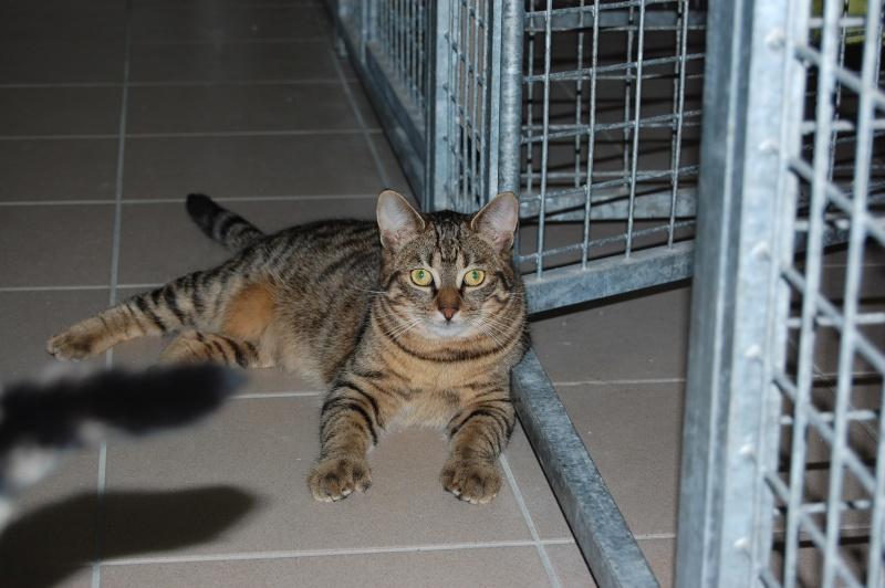HERMIONE et CASSIOPEE, chatonnes tigrées, nées mi-mai (60) Dsc_0021