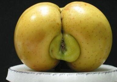 Pommes de ... Nature10