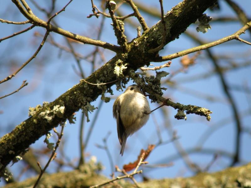 Hiver en Mayenne Vauvro52