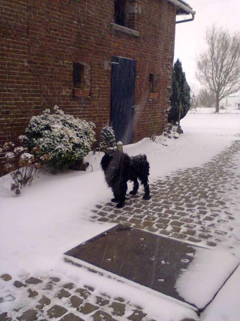 la neige est-elle arrivée chez vous ?  - Page 10 Photo013
