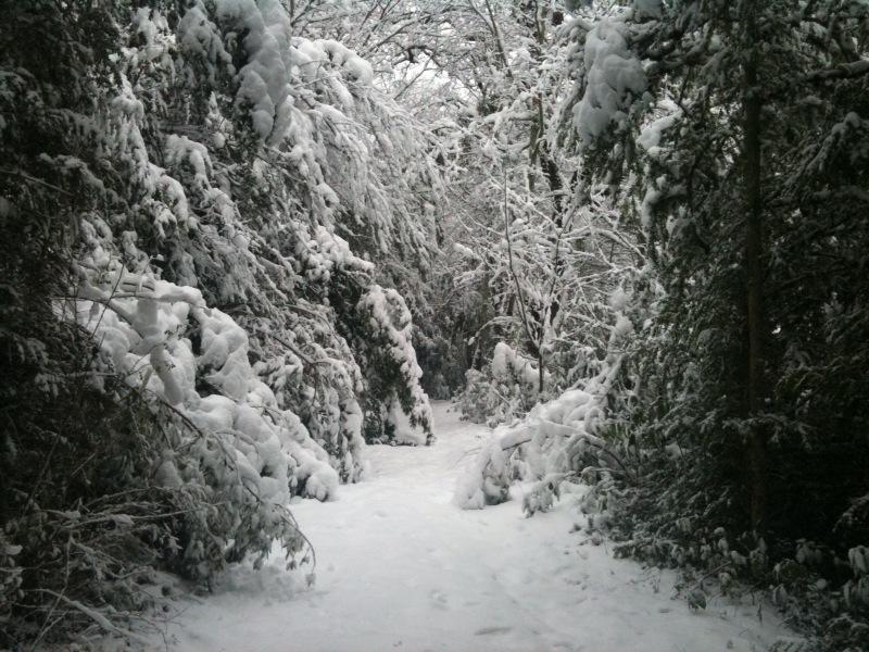 la neige !! Chemin10