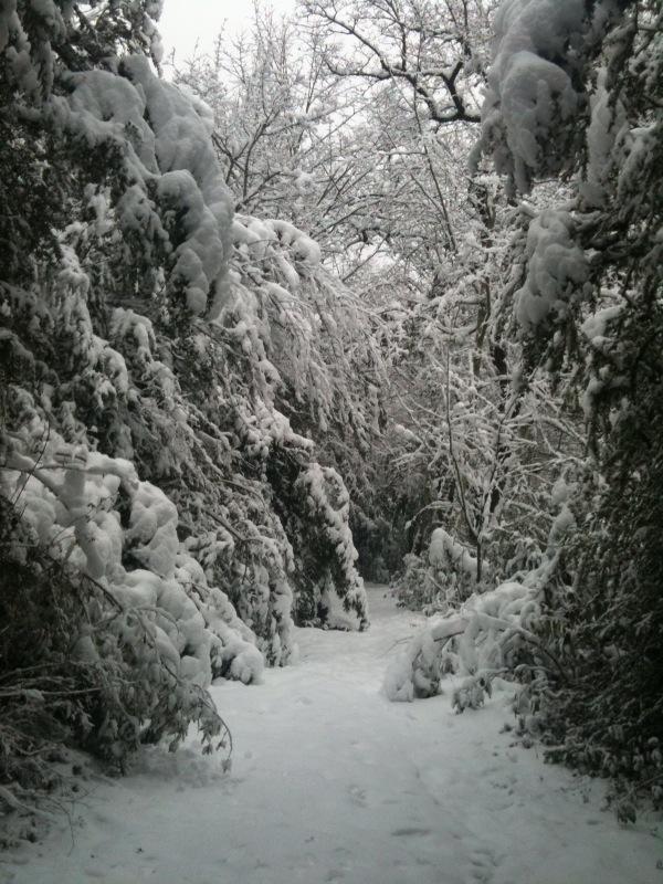 la neige !! Chemin11