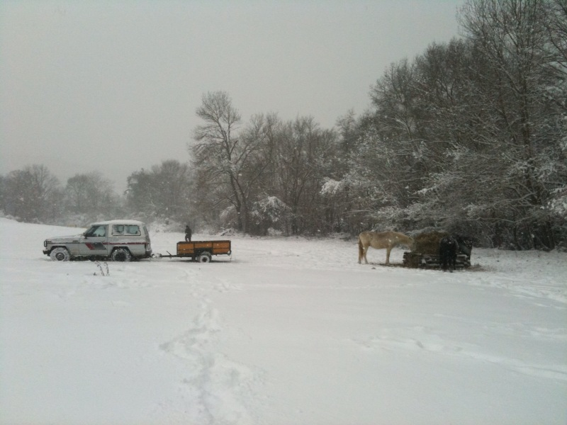 la neige !! Nourri10