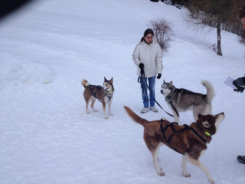 Candy, Chipie, Baltik en vacances de neige pour la grande odyssée 2013 Img_0810