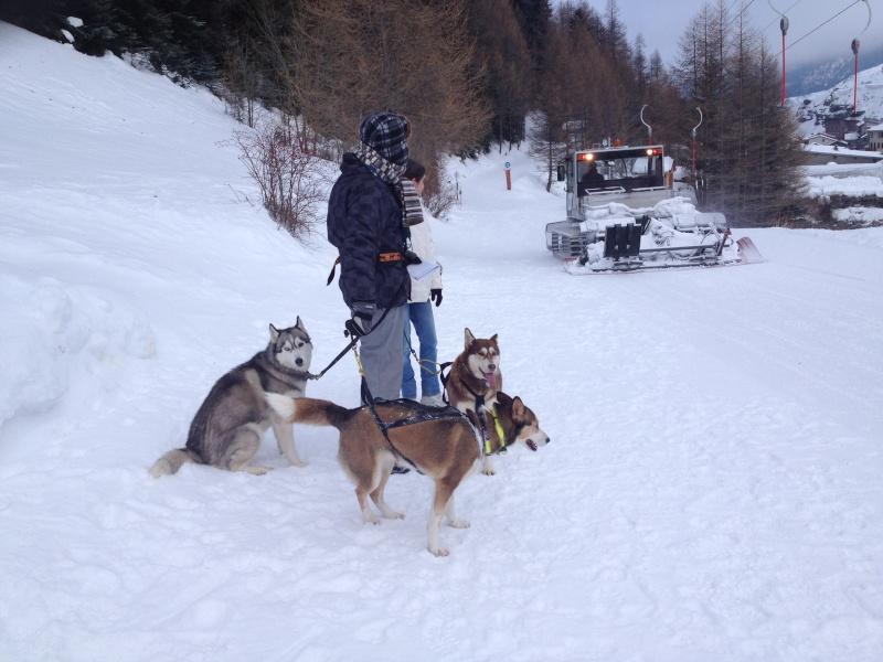 Candy, Chipie, Baltik en vacances de neige pour la grande odyssée 2013 Img_0811