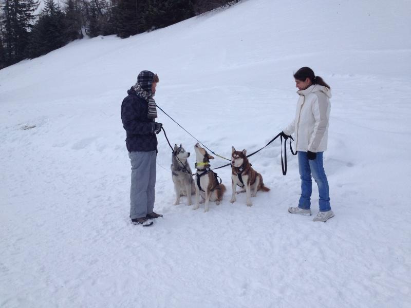 Candy, Chipie, Baltik en vacances de neige pour la grande odyssée 2013 Img_0812
