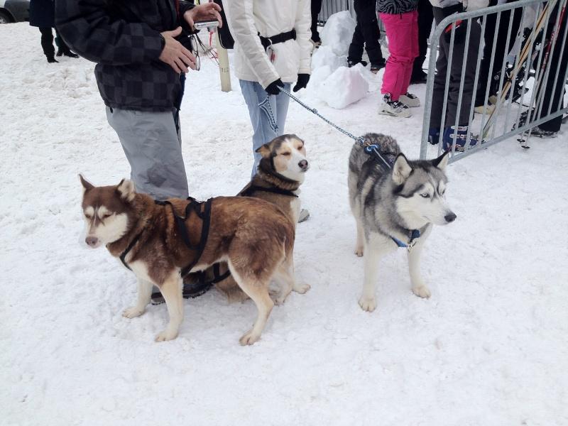 Candy, Chipie, Baltik en vacances de neige pour la grande odyssée 2013 Img_0911