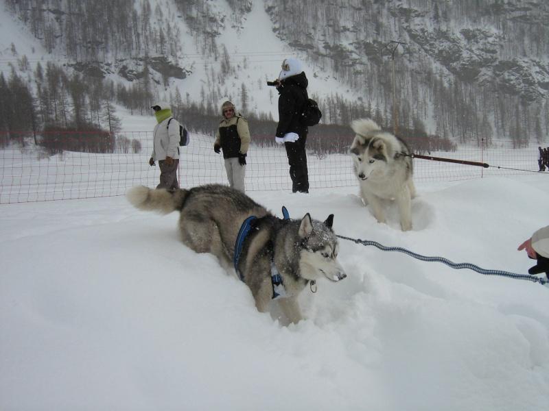 Candy, Chipie, Baltik en vacances de neige pour la grande odyssée 2013 Img_1217