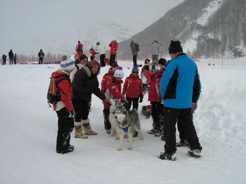 Candy, Chipie, Baltik en vacances de neige pour la grande odyssée 2013 Img_1218