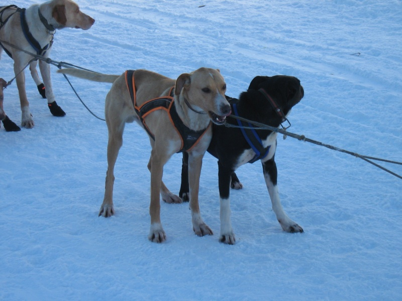 Candy, Chipie, Baltik en vacances de neige pour la grande odyssée 2013 Img_1222