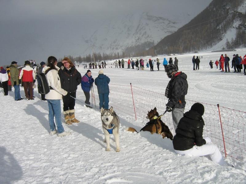 Candy, Chipie, Baltik en vacances de neige pour la grande odyssée 2013 Img_1225