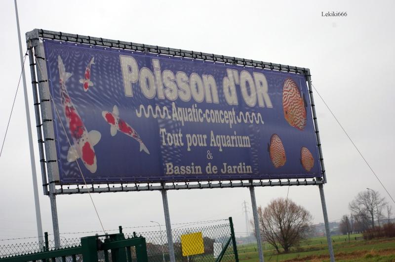 SORTIE AU POISSON D'OR LE 30 DECEMBRE 2009 Poisso10