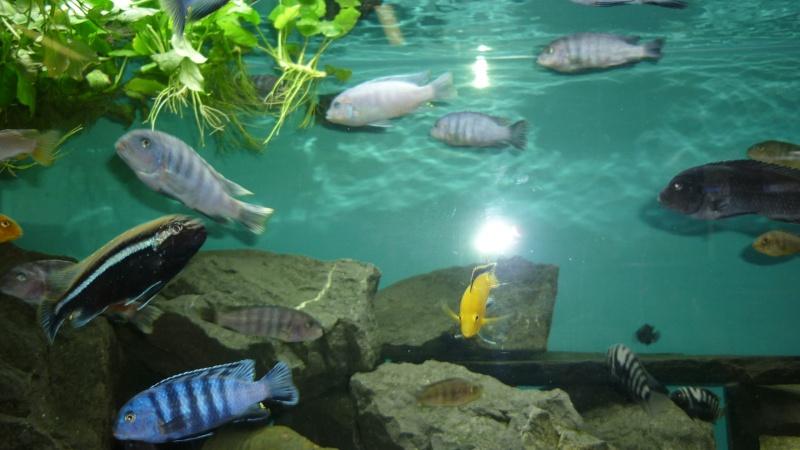 AQUA-REPTI-SUD (club aquariophile et terrariophile a harnonc P1060210
