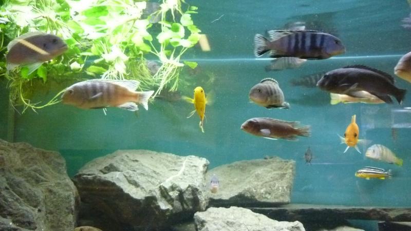 AQUA-REPTI-SUD (club aquariophile et terrariophile a harnonc P1060211