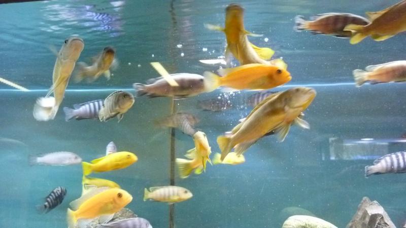 AQUA-REPTI-SUD (club aquariophile et terrariophile a harnonc P1060212