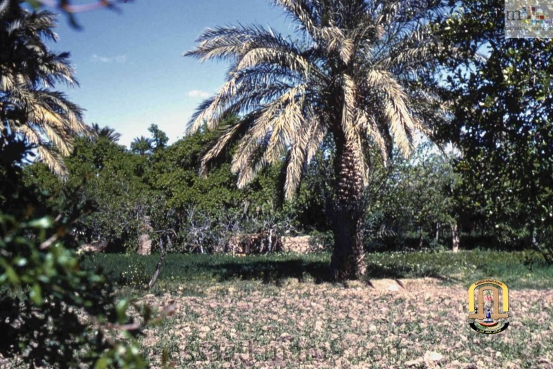 من اندر الصور التي سوف تشاهدونها لمدينة مسعد (الجزء الثاني ) مدينة مسعد 1959/1960 01_1411