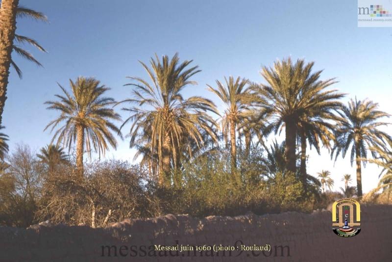 من اندر الصور التي سوف تشاهدونها لمدينة مسعد (الجزء الثاني ) مدينة مسعد 1959/1960 01_611