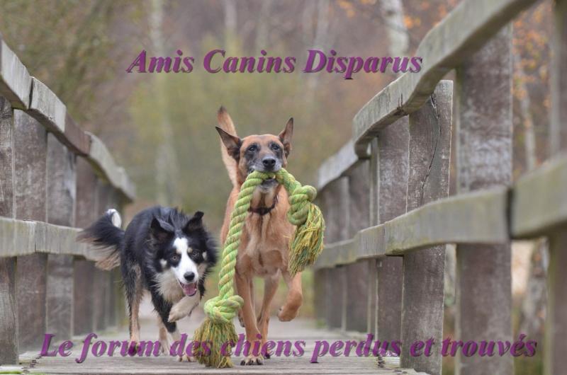 AMIS CANINS DISPARUS